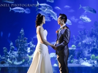Couple being married in front of Oceans Gallery