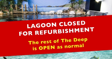 https://www.thedeep.co.uk/plan-your-visit/deep-tour/lagoon-of-light