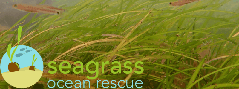 Banner PROJECT SEAGRASS