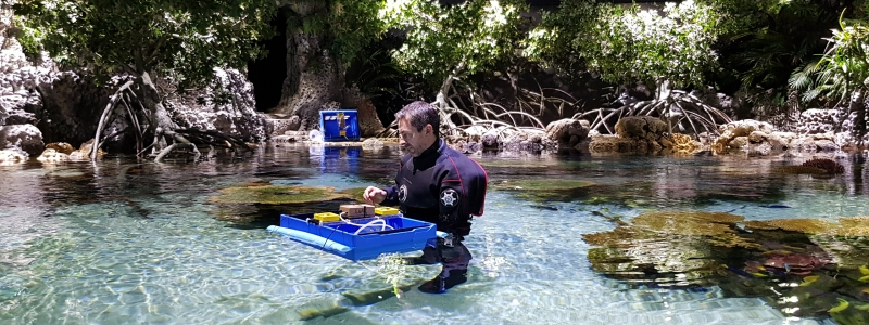 Banner ADVANCES FOR TROPICAL FISH BREEDING IN NEW COLLABORATION