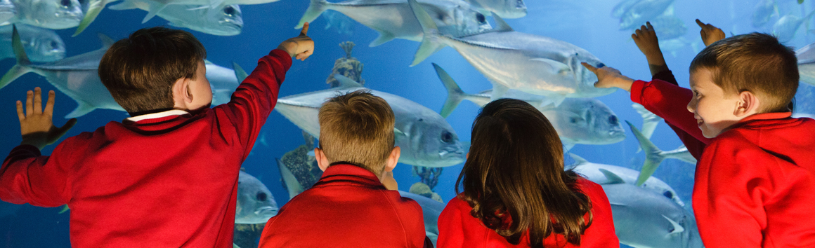 Young school children looking at fish