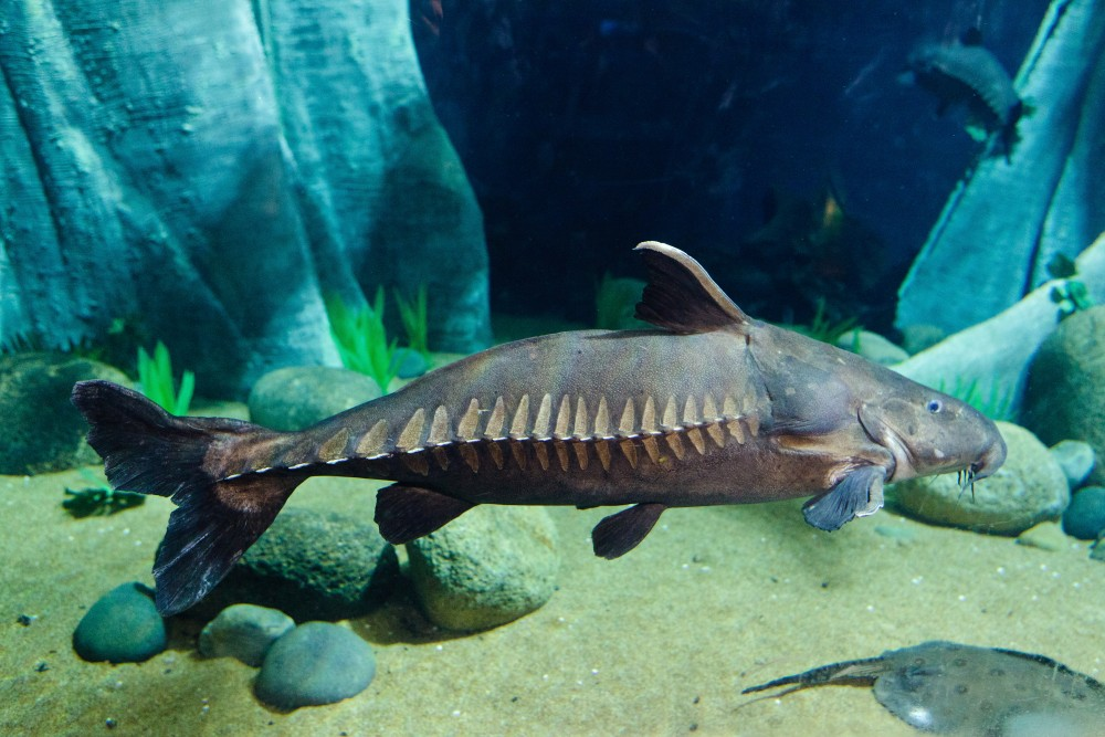 Catfish For Sale >> Big Fish Campaign | The Deep