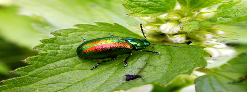 Banner IT'S TIME TO SAVE THE TANSY BEETLE