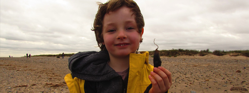 Banner SHARK EGG CASE HUNT RESULTS