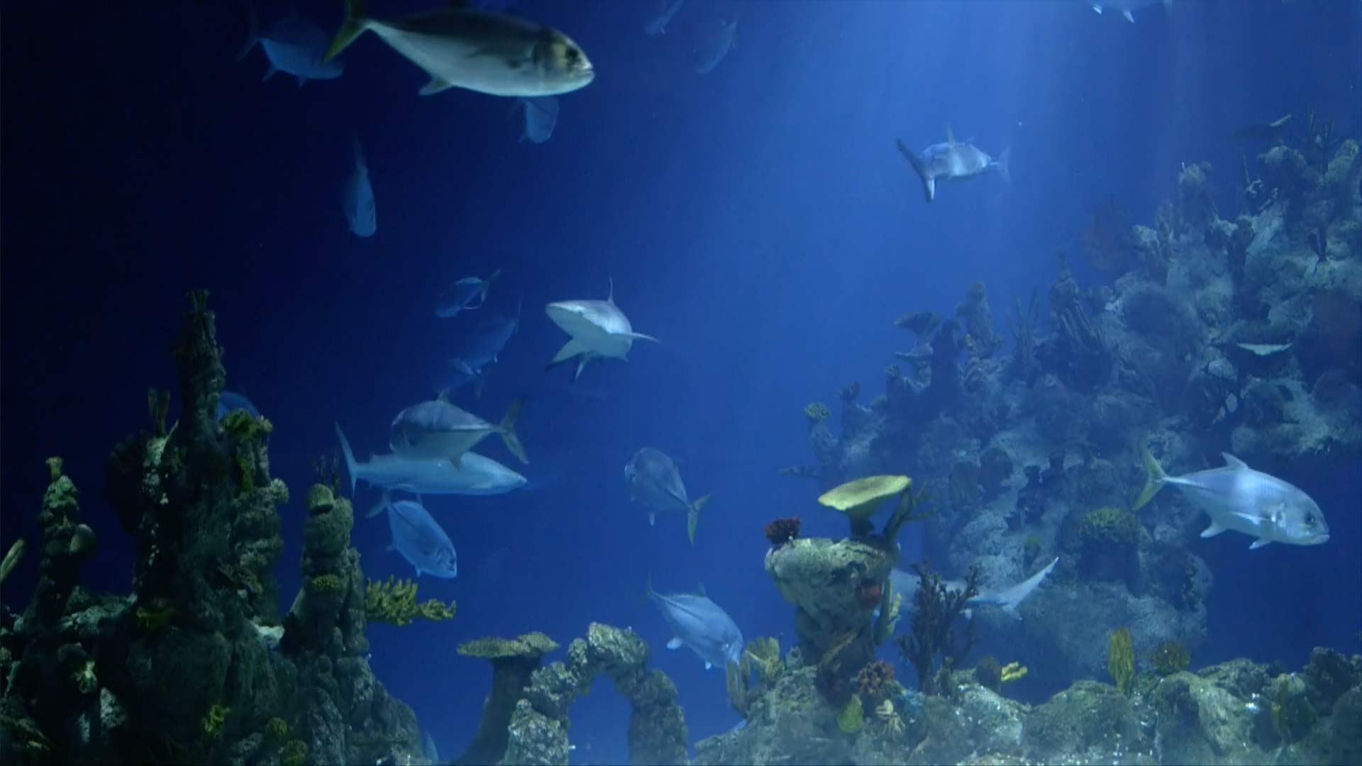 e of the UK s biggest and best aquariums